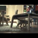 Ikea – Szczęśliwe koty
