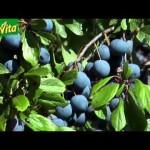 Nestle – Nesvita, ze śliwkami i czerwonymi owocami