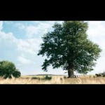 Kasztelan – Drzewo